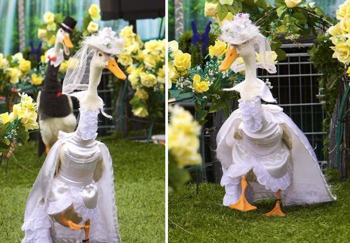 pied-piper-duck-show-1 (700x487, 167Kb)