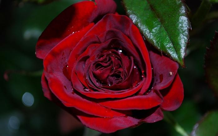 Плейкаст красивая музыка и цветы для