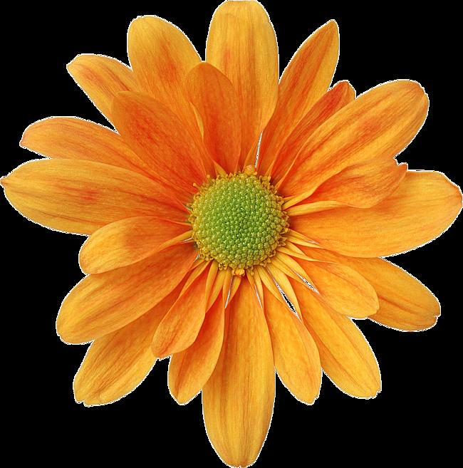 Картинки пнг цветы 1