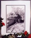 Превью Ronnie Rowe Colonial Pathway (286x349, 20Kb)