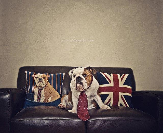 прикольные фото собак (640x524, 72Kb)