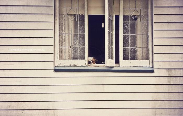 прикольные фото собак 6 (700x444, 90Kb)