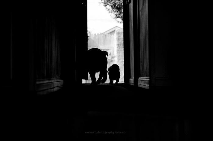 прикольные фото собак 10 (700x465, 19Kb)