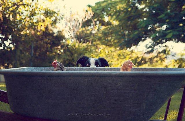 прикольные фото собак 16 (640x418, 71Kb)