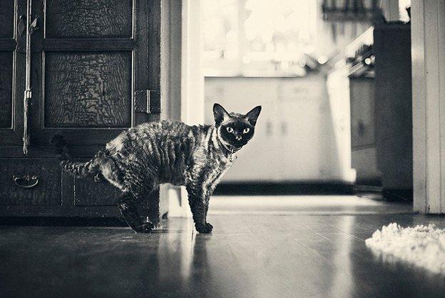 прикольные фото кошек 2 (624x417, 57Kb)