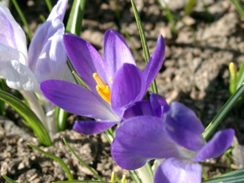 Цветы цветут - весна в разгаре!