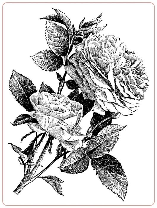 rosev (529x700, 207Kb)