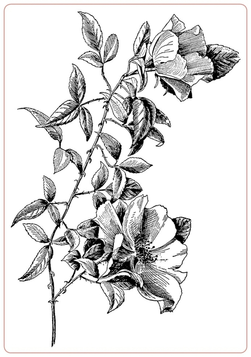 rosev (4) (491x700, 149Kb)