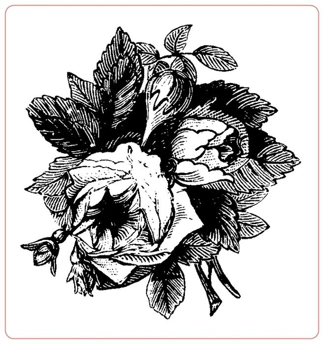 rosev (10) (659x700, 219Kb)