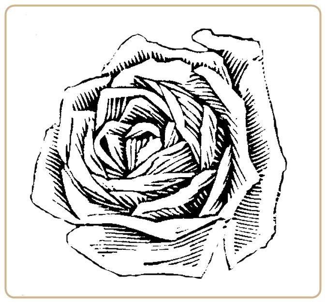 Черно-белый роза рисунок