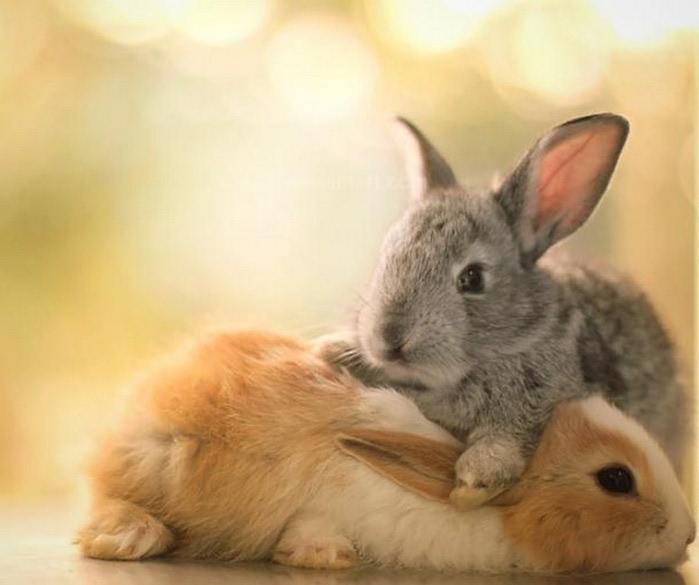 Милые животные - фото Essa Al Mazroee 1 (700x585, 57Kb)