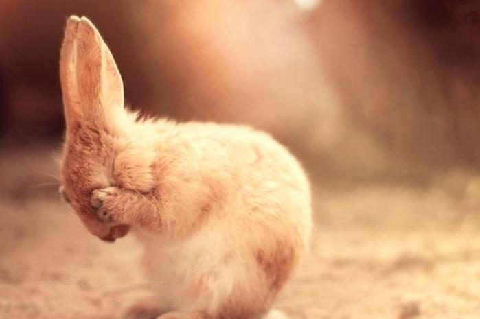 Милые животные - фото Essa Al Mazroee 4 (700x465, 41Kb)