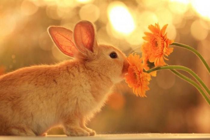 Милые животные - фото Essa Al Mazroee 6 (700x465, 53Kb)