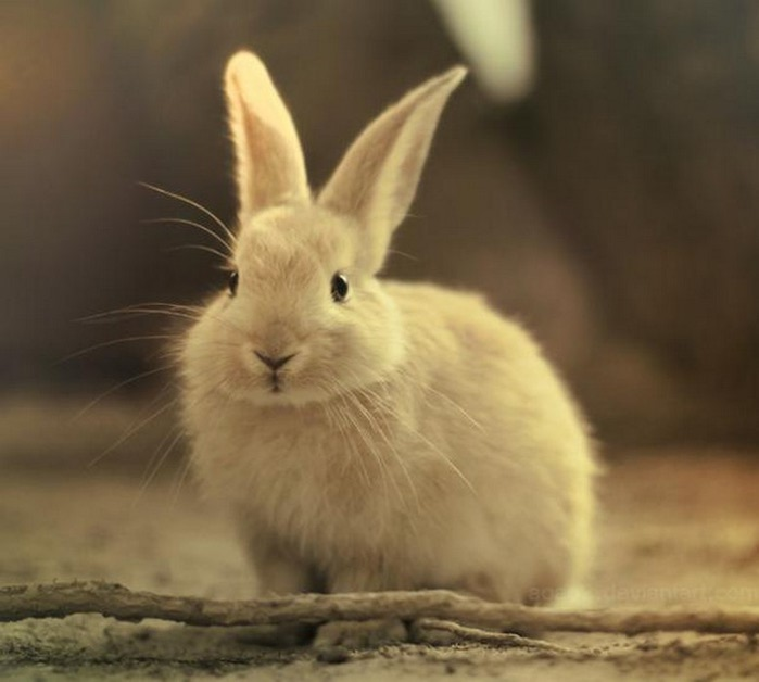 Животные Фото Картинки