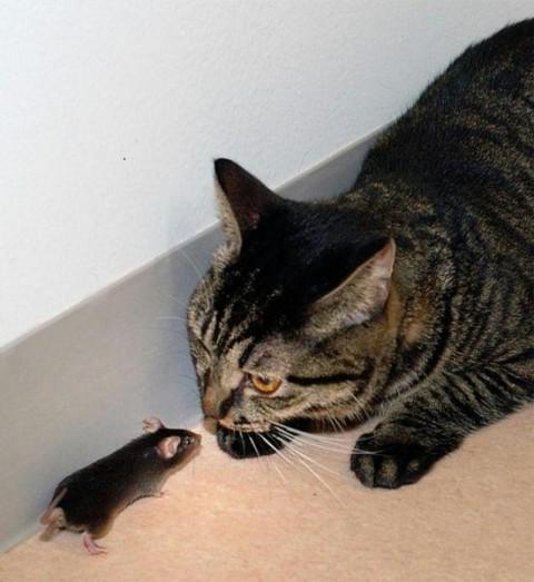 кошки мышки/3518263_ti (480x523, 55Kb)