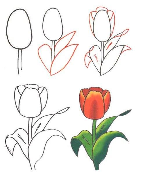 Цветы Рисуем цветочки 1ч.