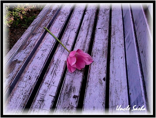 foto-0027.05.12.1 (664x504, 172Kb)
