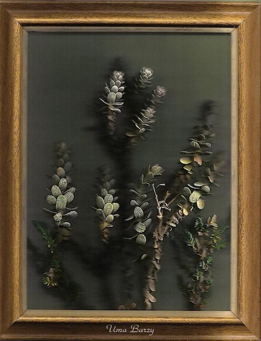 Сканография - фотография без фотоаппарата 19 (535x700, 324Kb)