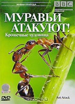 1337915940_murav_i (249x345, 27Kb)