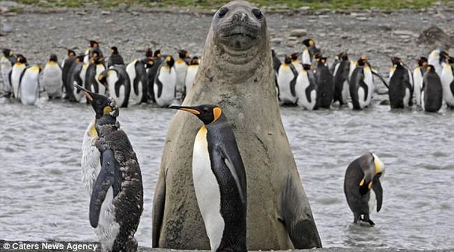 Смешные фото домашних животных - альпака 18 (650x361, 98Kb)