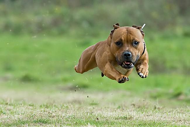 Смешные фото домашних животных - альпака 25 (650x434, 72Kb)