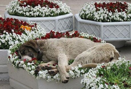 собака в цветах (460x315, 40Kb)