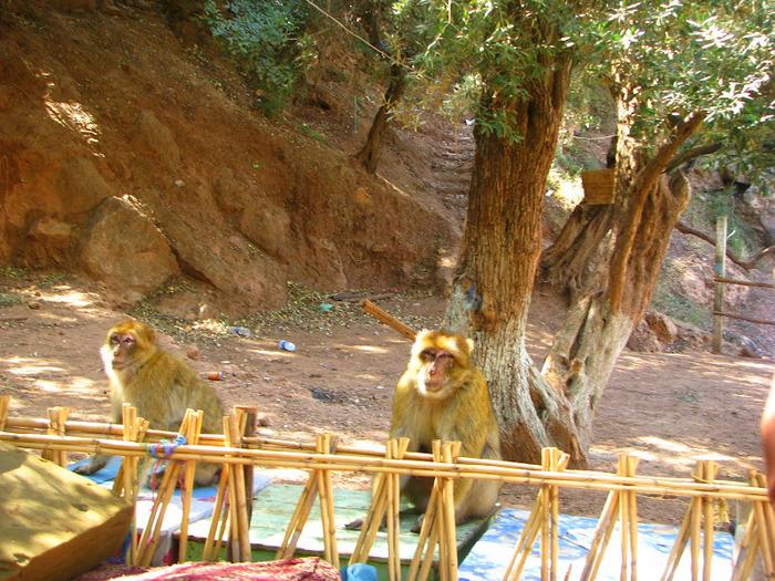 Водопад Узуд– Покрывало влюбленных в Марокко. 28664