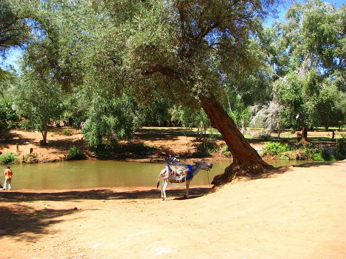 Водопад Узуд– Покрывало влюбленных в Марокко. 38306