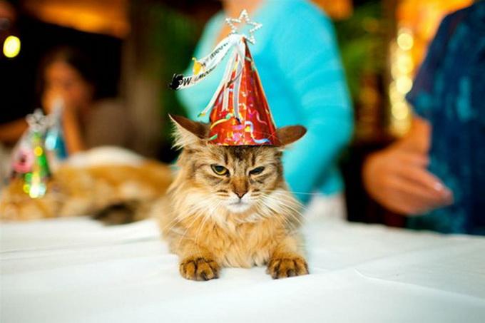 одежда для кошек фото 4 (680x453, 83Kb)