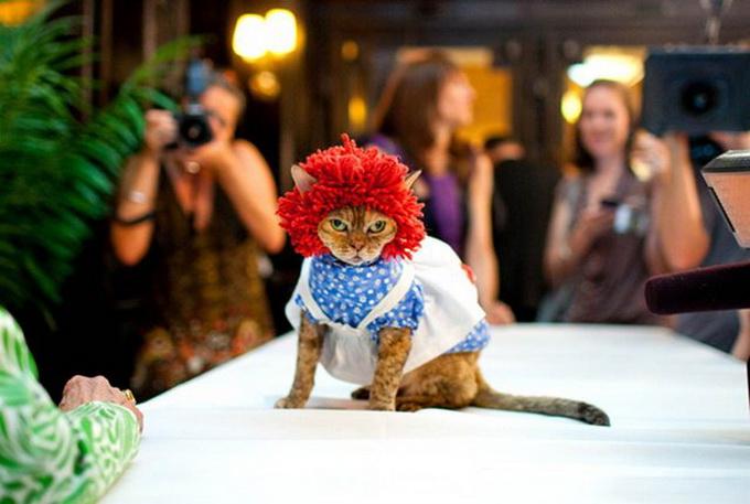 одежда для кошек фото 6 (680x457, 92Kb)