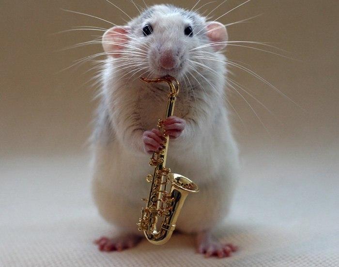 смешные крысы фото 4 (700x552, 51Kb)