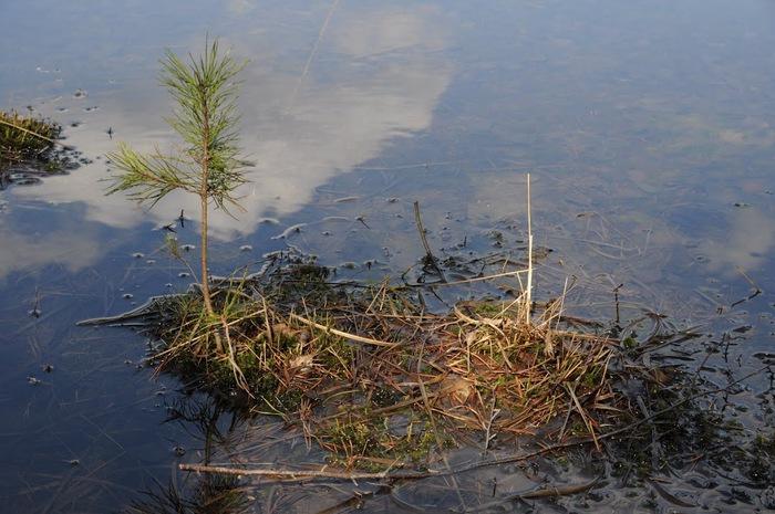 природный парк Дюбенская пустошь -и бобры. 72525