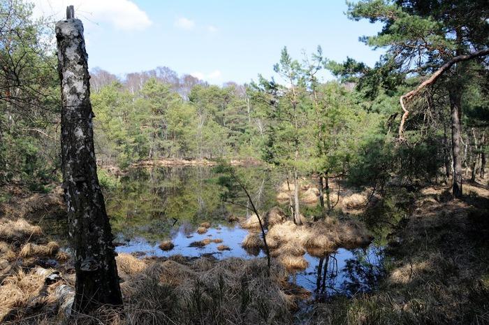 природный парк Дюбенская пустошь -и бобры. 37834