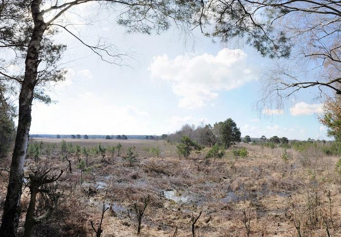 природный парк Дюбенская пустошь -и бобры. 64290