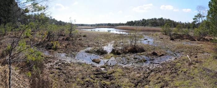 природный парк Дюбенская пустошь -и бобры. 34737