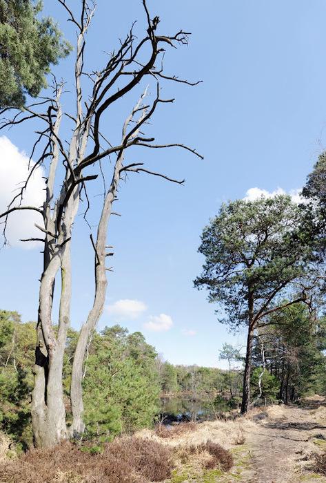 природный парк Дюбенская пустошь -и бобры. 87076