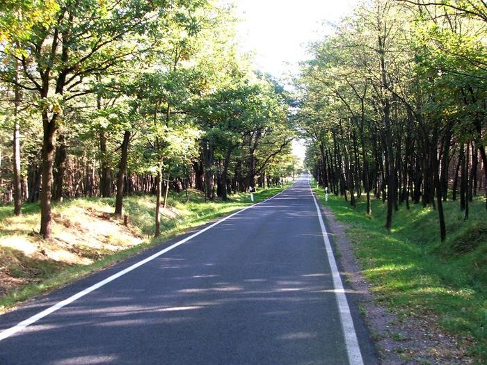природный парк Дюбенская пустошь -и бобры. 39419