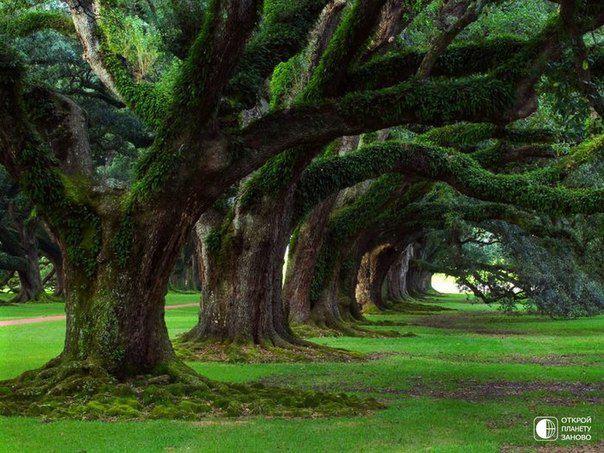 Волшебные деревья в Национальном парке Нью-Форест, расположенном на юго-востоке Великобритании (604x453, 74Kb)
