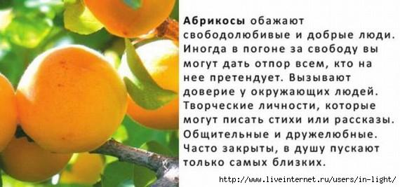абрикос (570x267, 99Kb)