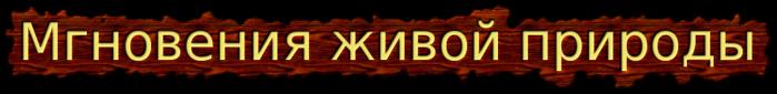 cooltext707350817 (700x85, 85Kb)