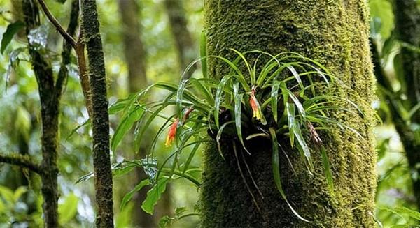 Самые красивые леса мира 2 (600x327, 82Kb)
