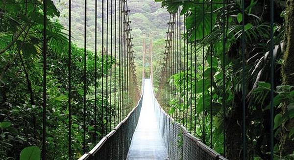 Самые красивые леса мира 6 (600x327, 87Kb)