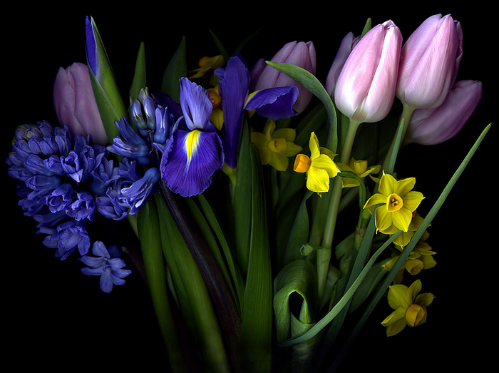 87814002_500px__Photo_LET_ME_PUT_some_SPRING_in_your_step_by_Magda_indigo (700x523, 400Kb)