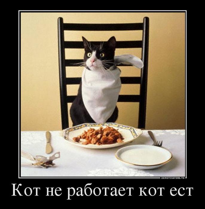 Хорошо быть котом