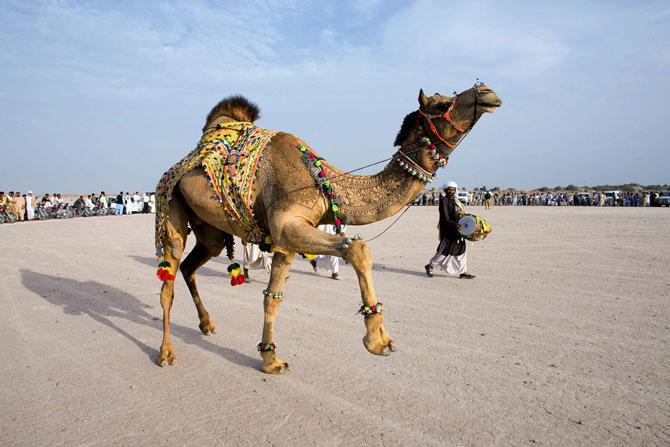 фото верблюд 1 (670x447, 68Kb)