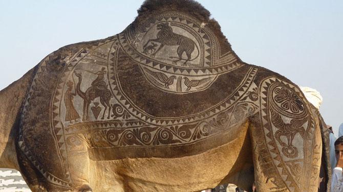 фото верблюд 3 (670x376, 67Kb)