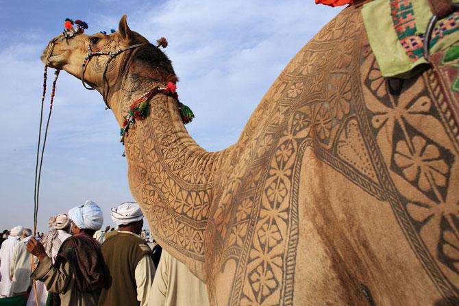 фото верблюд 5 (670x447, 89Kb)