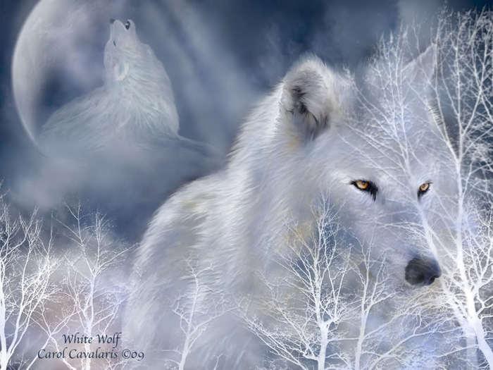 Wolfs (1-1) (700x525, 44Kb)