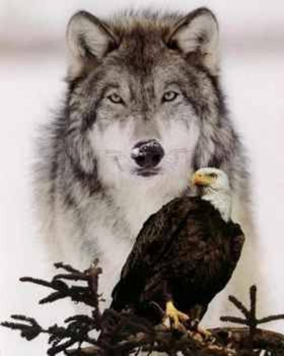 Wolfs (7) (560x700, 213Kb)