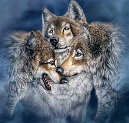 Wolfs (9) (446x424, 43Kb)
